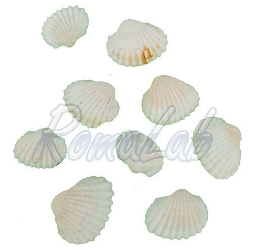 25 grammi di conchiglie naturali gradazioni del bianco Shells natural 291328457745